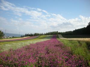 Hokkaido2009_251