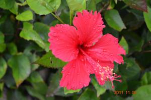 1_flowers_korijima