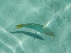 510_fish