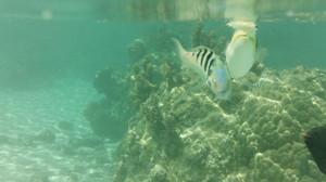 511_fish