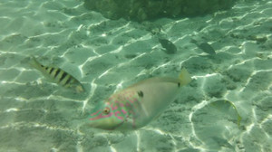 513_fish